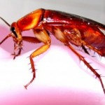 Have Roaches Claimed Your Home as Prime Real Estate?