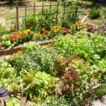 Tips For Avoiding Spring and Summer Garden Pests