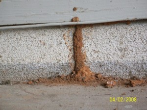 Wood Damage caused by Termites