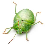 Pest Facts Weird But True Green Pest Solutions