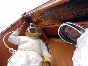 Beekeeper in Utah