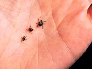 Ticks crawling