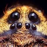 BOOOOO! Beware of the Wolf Spider!