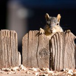 How to Prevent Pests From Invading in Winter