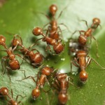 How to Tell if You Have Fire Ants