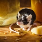 10 Facts About Mice You Probably Didn't Know