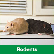 PL-rodents