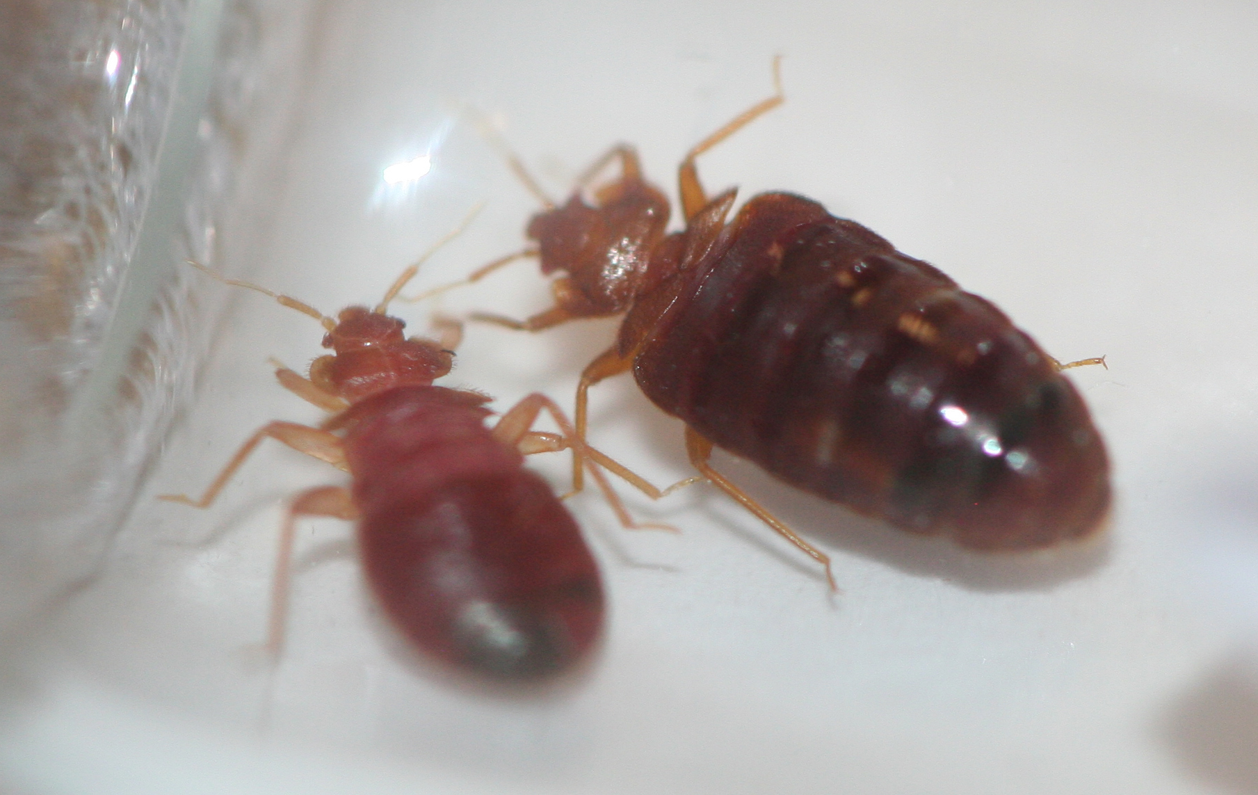 How To Check Your Hotel For Bed Bugs