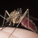 Mosquito Control – Tips For the Summer