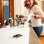 Cockroach on counter