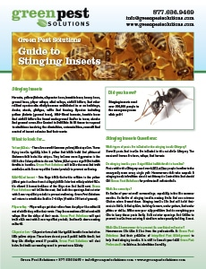 Guide to Stinging Insects