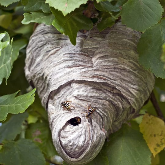 Where to Look for Bees' Nests