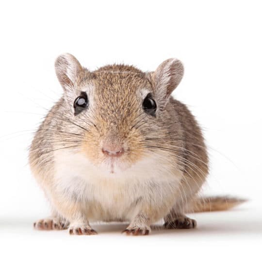 Winter Has Arrived and So Has Rodent Season — How to Manage Infestations