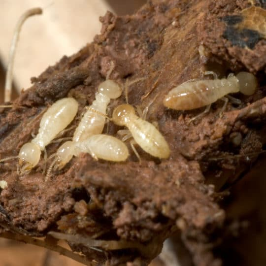5 Signs of a Termite Problem