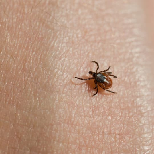 Introduction to Lyme Disease