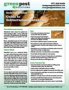 Guide to Termites