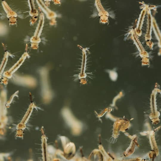 What Are Some of the Most Common Sitting Water Spots for Mosquito Eggs?