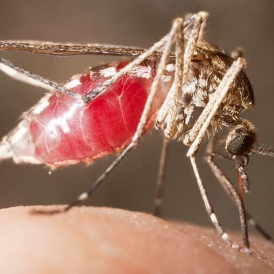 The Top 6 Need-to-Know Facts About the Zika Virus