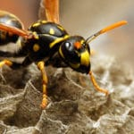 Quick Ways to Kill a Hornet in the Home