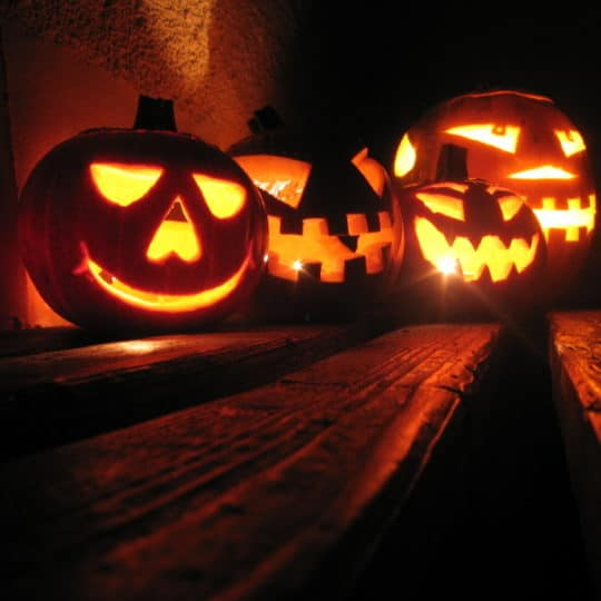 It's Halloween! What are the Scariest Pests in Pennsylvania?