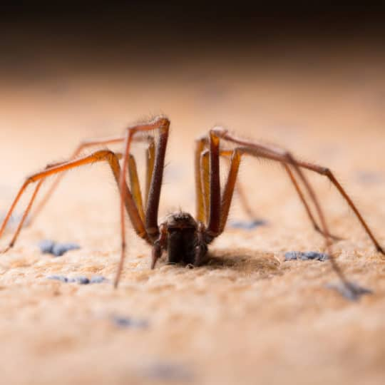 When Do Spider Invasions Require a Pest Control Company?