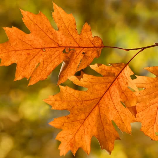 What Fall Colors Mean For Pests