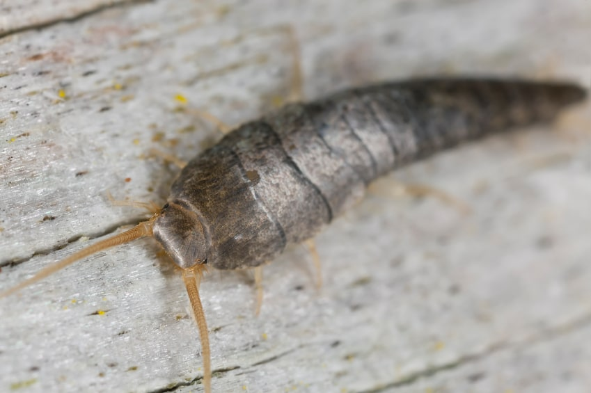 How To Keep Your Home Free Of Silverfish