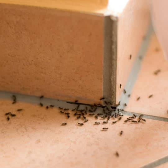 5 Facts About Ants
