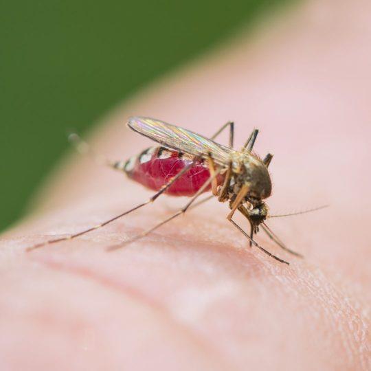 Zika Virus Update