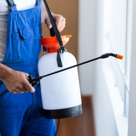 DIY Pest Control Vs. When to Call an Exterminator