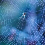 What Are Spider Webs Made of? And More Fascinating Spider Facts