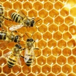 Do All Bees Make Honey?