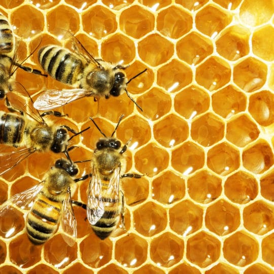 bees-make-honey