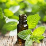 Does Peppermint Oil Drive out Spiders?