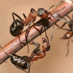 Five Common Ant Questions Answered