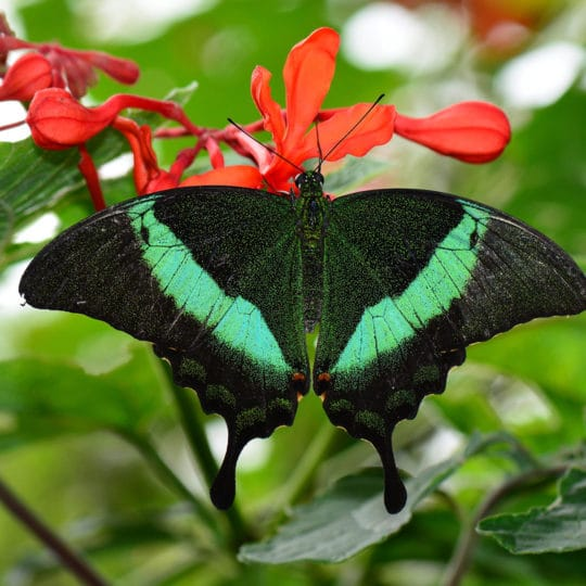 Top 5 Most Colorful Insects