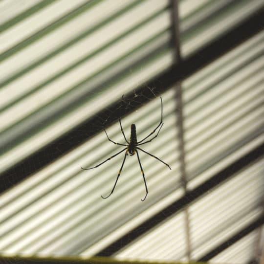 Will Vinegar Get Rid of Spiders?