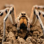 Five Facts about Wolf Spiders