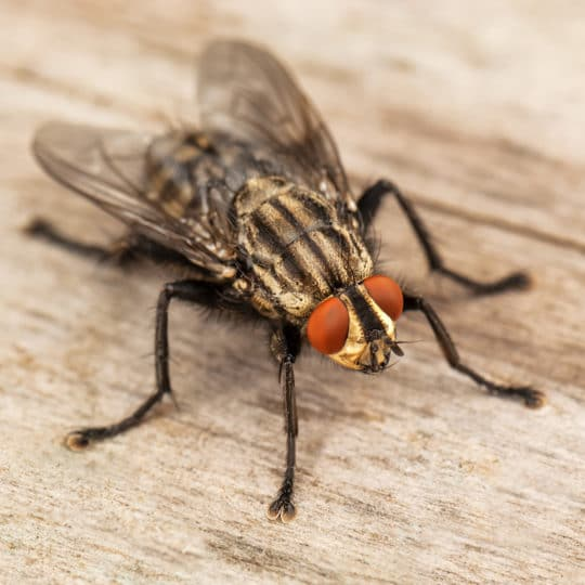 Are Flies Attracted to Light?