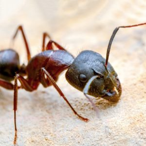 do ants die in the winter